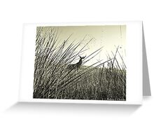Hackberry Buck Greeting Card