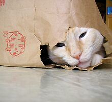 Monte in the Bag by montecore827