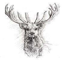 Noble - Red Deer Stag in Pencil by justaholmesboy