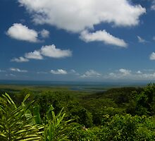 The Daintree by Ryan Pedlow