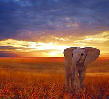 Elephant baby'... by Valerie Anne Kelly