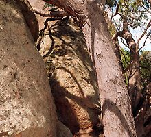 Brown and Umber : Rocks at Melville Caves by Lozzar Flowers & Art