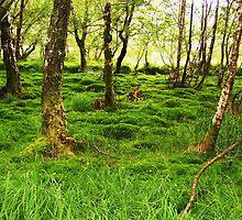 A Calming Curiousity - Wicklow, Ireland by Katlyn Novitski