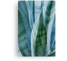 Agave by moonlight Canvas Print