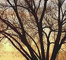 Tree at sunrise by darb85