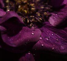 Purple by annalisa bianchetti