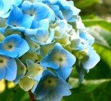 Blue Hydrangea Sticker