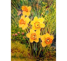 Daffodil Quintet Photographic Print