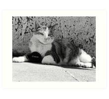Canon Cat Art Print