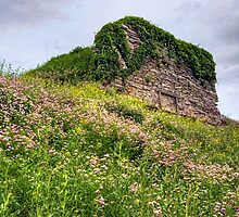 Wildflowers Surround the Historic Stonework Lime Kiln by Gene Walls