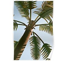 Central Texas Palm Tree Poster