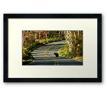 #624  New Jersey Black Bear Framed Print