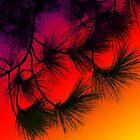 Pine Needles by Denise McDermott