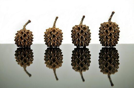 Cypress Seed Pods by carlosporto