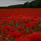 Poppy Fields by Dave Godden