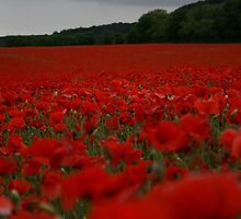 Poppy Fields by Dave Godden