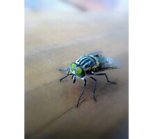 """""""Louie"""" the fly.... Photographic Print"""