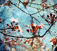 Blossom Skies by karolina