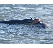 friendly dolphin Photographic Print