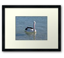 pelican looking down his nose Framed Print