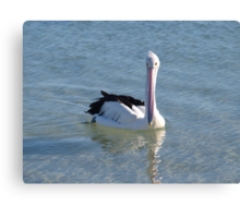 pelican looking down his nose Canvas Print