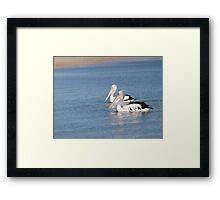 a pair of pelicans on their morning swim Framed Print
