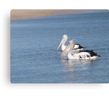 a pair of pelicans on their morning swim Canvas Print