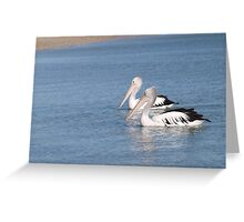 a pair of pelicans on their morning swim Greeting Card