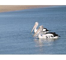 a pair of pelicans on their morning swim Photographic Print