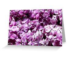 Dark Purple Lilacs Greeting Card