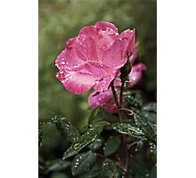 Raindrops on Roses... Photographic Print