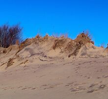 Montauk Walking Dunes by Dandelion Dilluvio