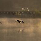 Three Geese in the Mist by reindeer
