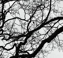 Where's the Paroquet? by ellesmerecollec