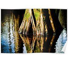 bald cypress Poster