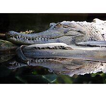 Menacing Crocodile Photographic Print