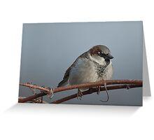 Sparrow on Vine Greeting Card