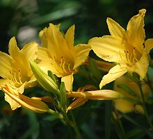 Yellow Flower Triplets by Robert Covell