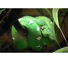 Neon Green Snake Photographic Print