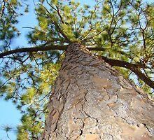 Pine Tree In My Neighborhood by Wanda Raines