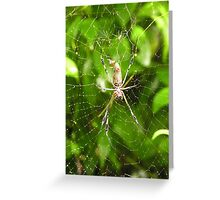 Giant Spider-Costa Rica Greeting Card