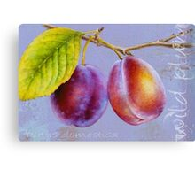 Wild plum - Prunus domestica Canvas Print