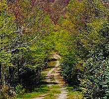 Country Back Road To No Where by Roger Jewell