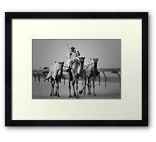 3 Camels Framed Print