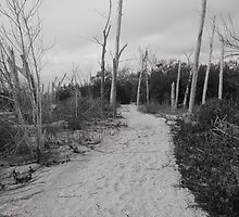 Beach Path by Rosalie Scanlon