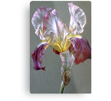 Flag Iris watercolor and gouache  Metal Print
