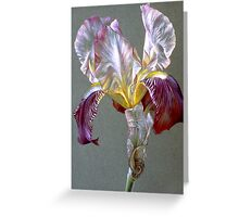Flag Iris watercolor and gouache  Greeting Card