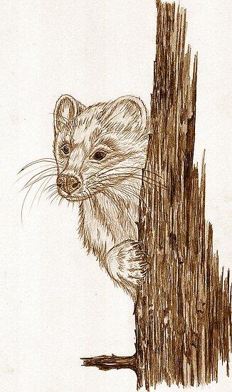 Pine Marten in pencil by sharpie