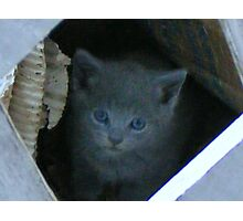 wary young kitten Photographic Print