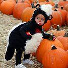 skunk in the pumpkin patch by Rodney55